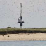 R 1 Vogelschutzinsel und Strombauwerk Minsener Oog